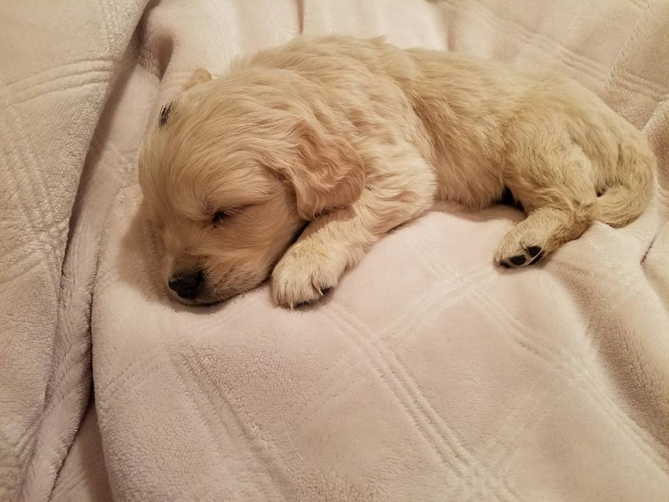 1-13-18_Nougat_5 Weeks Old 1.jpg