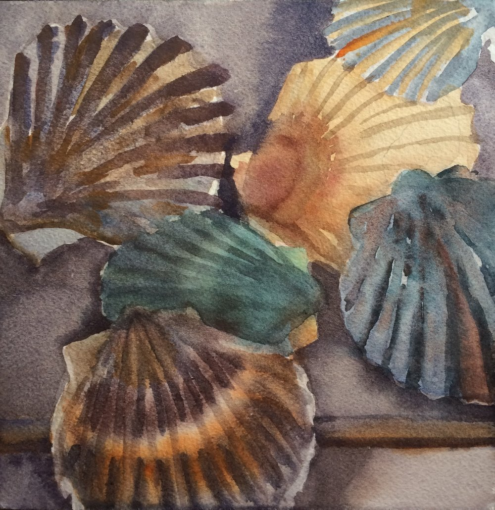 Scallop Shells,  2016, watercolor, 8 x 8