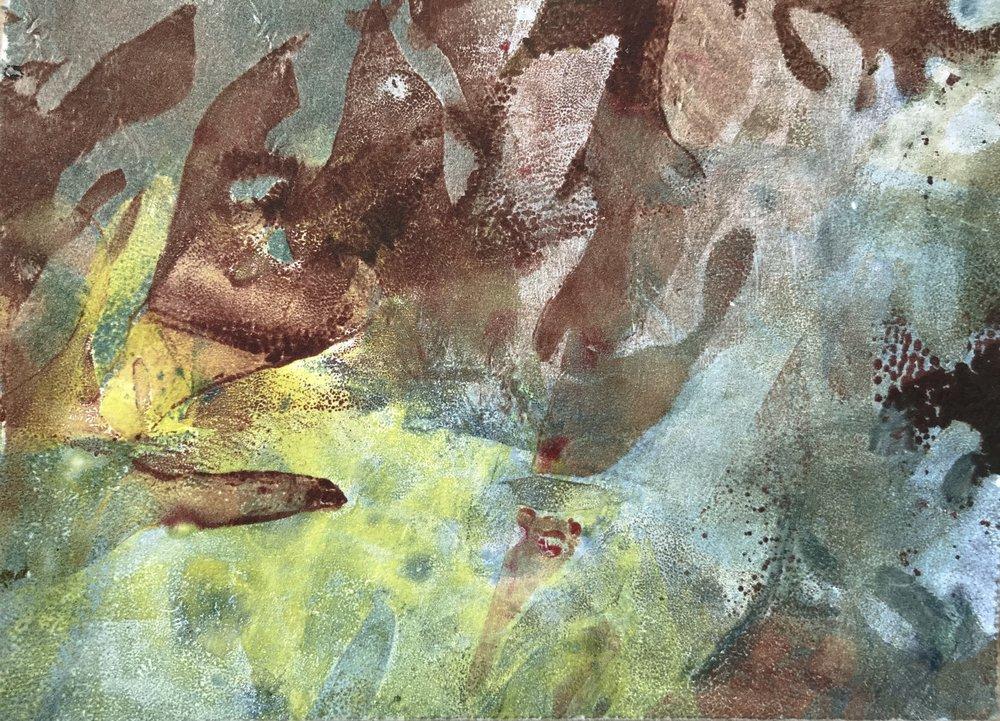 """Rockweed Study III,  2017, monotype, 5""""x 7"""""""