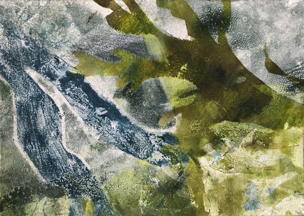 """Rockweed Study II,  2017, monotype, 5"""" x 7"""""""