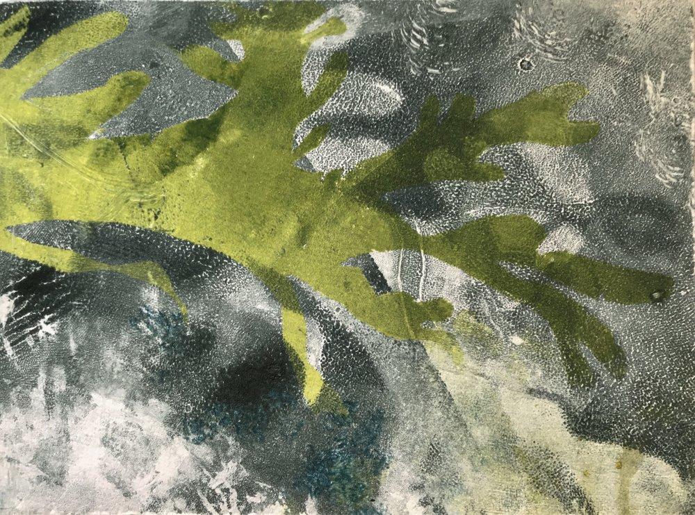 """Rockweed Study,  2017, monotype, 5"""" x 7"""""""