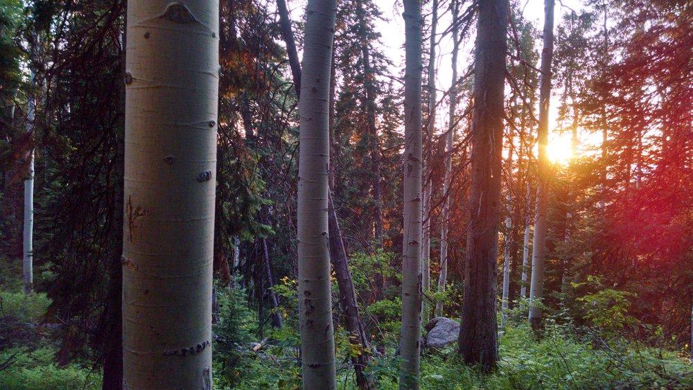The golden hour hits Pioneer Ridge, Steamboat Ski Resort.
