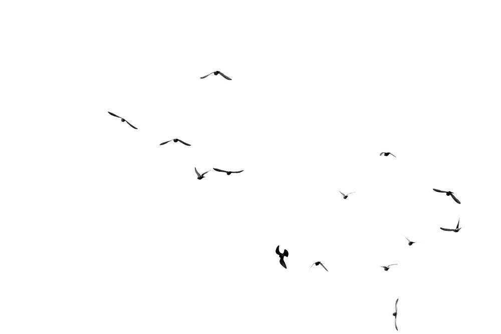 birds-on-white.jpg