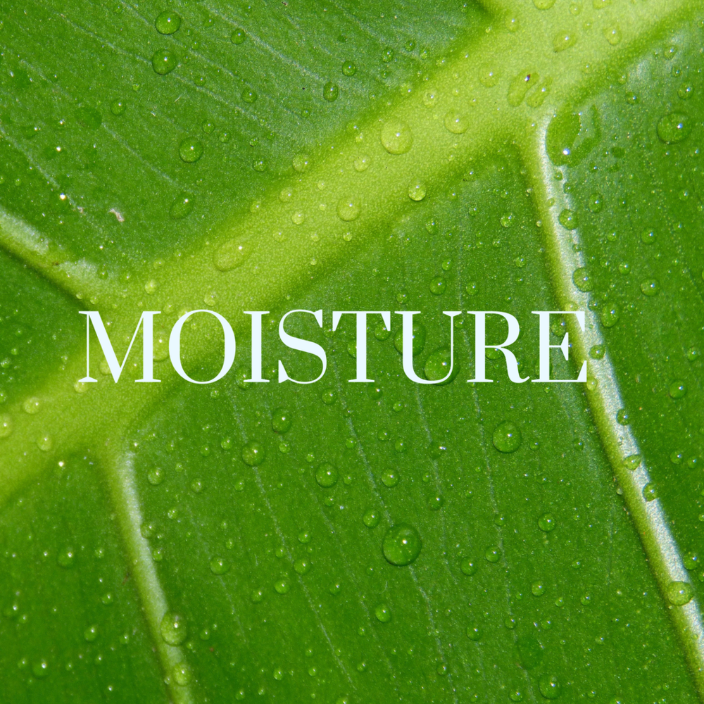 MOISTURE.png