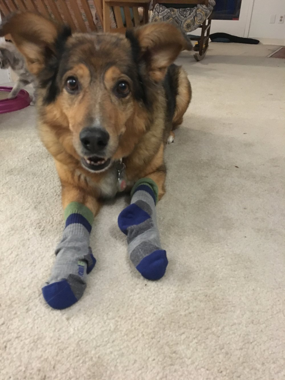 Stella tried on some socks because she missed me so much