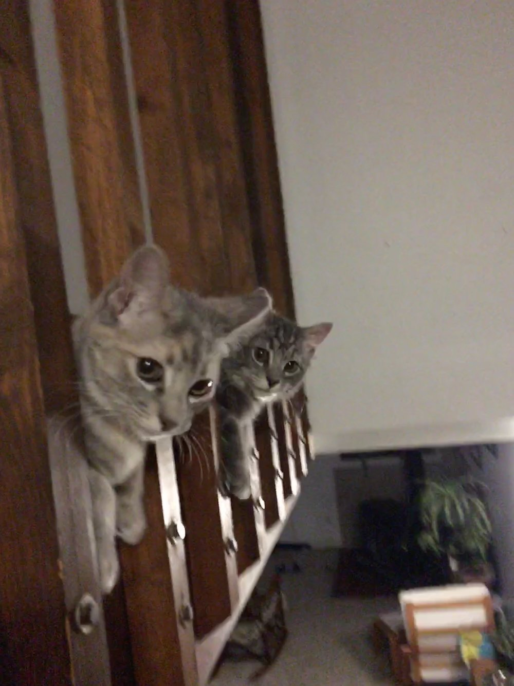 Sorry for the blurryness. But I look forward to these two faces welcoming me home every night!