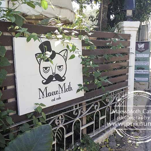 MaewMoth Cat Cafe   Chiang Mai, Thailand