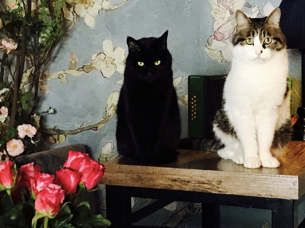 Two of the friendliest cats ever live at World's End Girlfriend in Beijing, China.