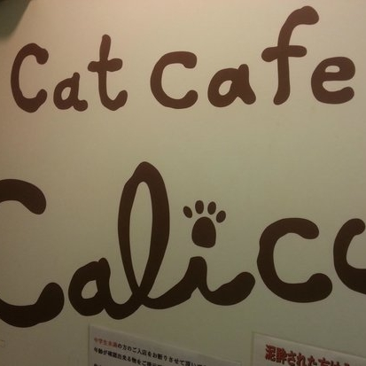 Cat Cafe Calico Shinjuku   Tokyo, Japan