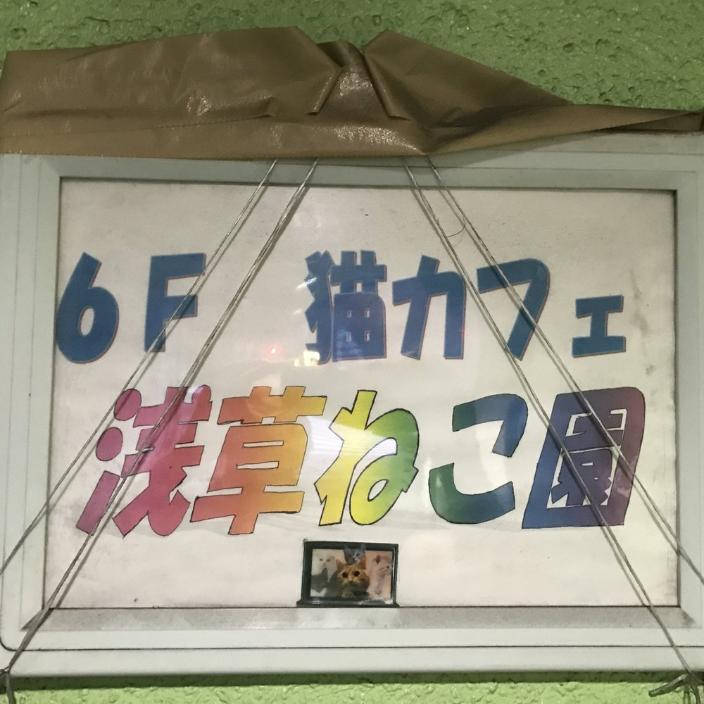 Cat Cafe Asakusa Neko-en   Tokyo, Japan
