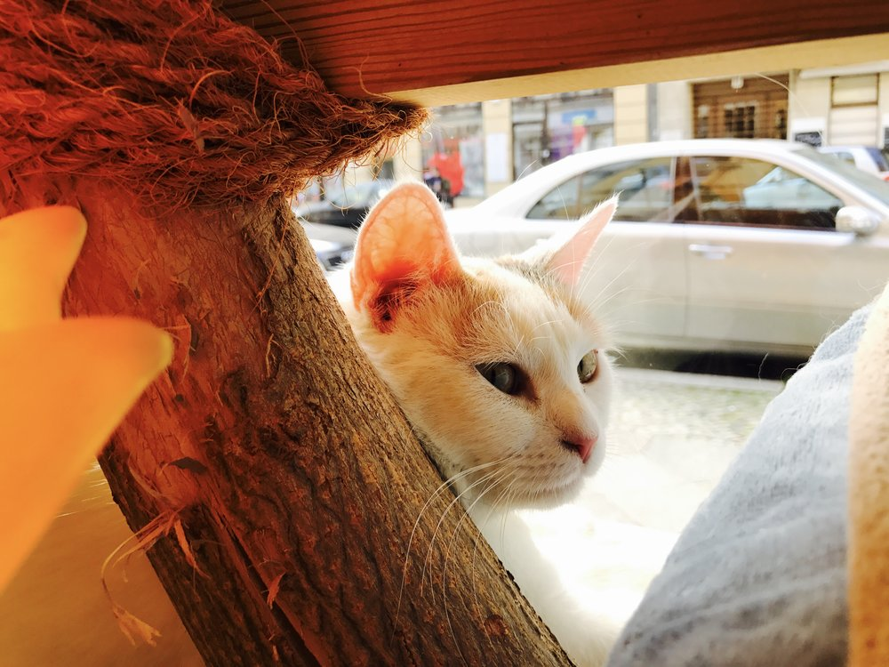 There are seven rescued cats that live at Zur Mieze