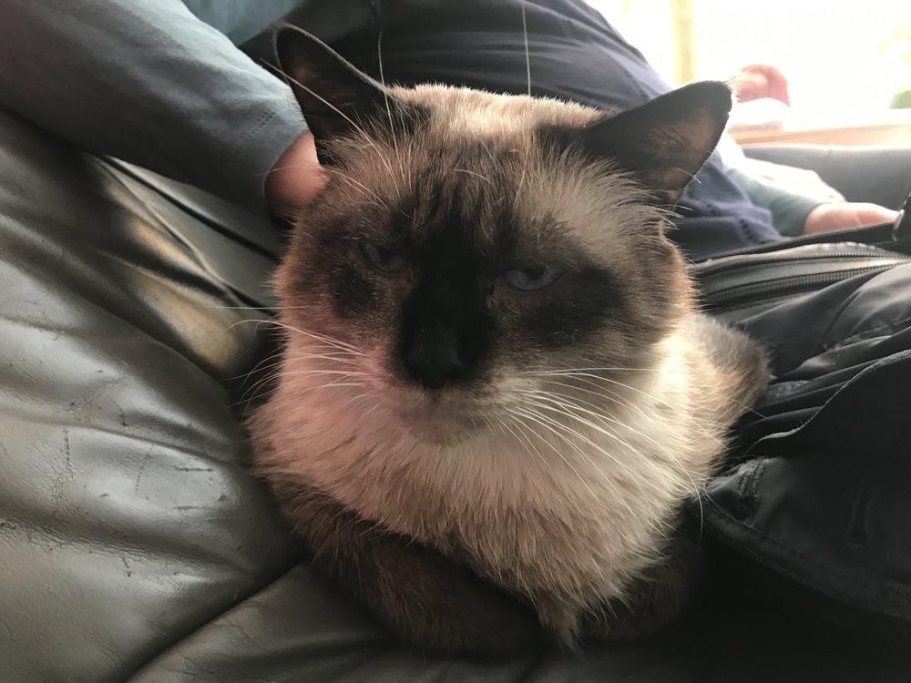 Jacky-Smokey loves to cuddle