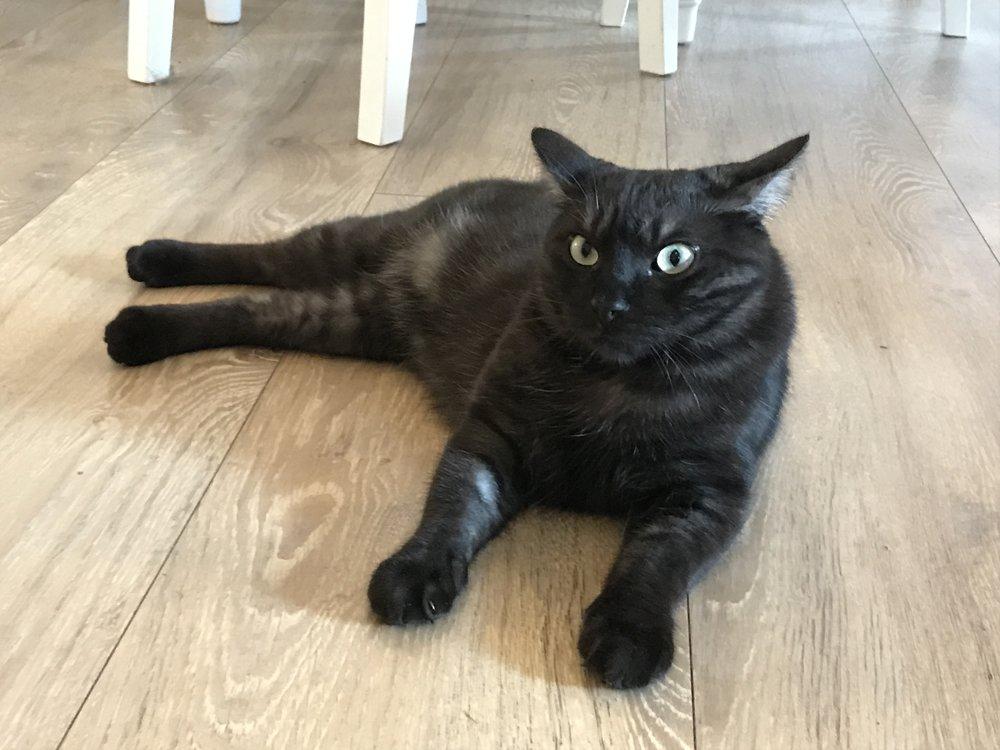 Mokka poses like a seasoned cat model