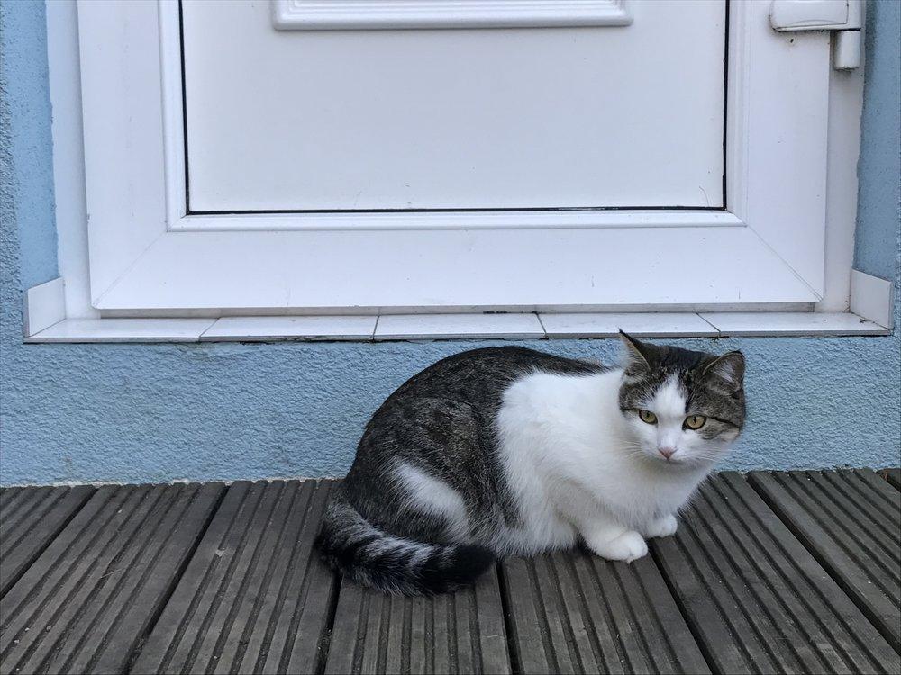 Mochi enjoys the outdoor patio