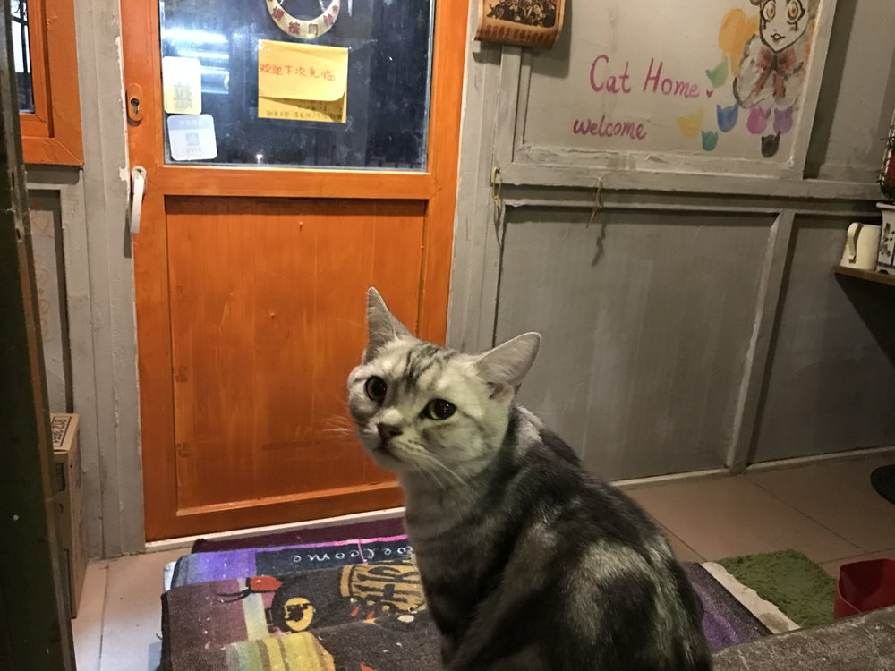 Cat World is a small cafe run out of a house
