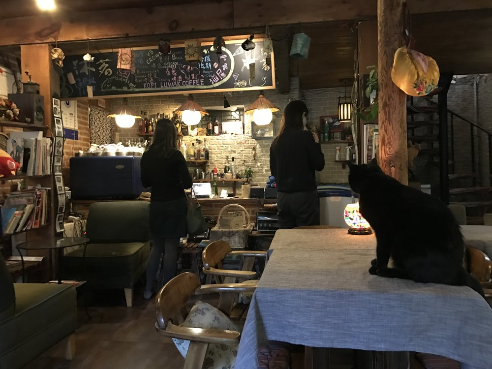 L'infusion is a cat cafe in Beijing's Wudaoying hutong district