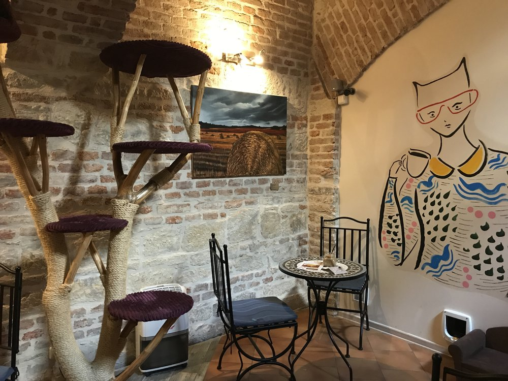 This cat cafe is adjacent to the Old Town near Florenc and Krizikova metro stops