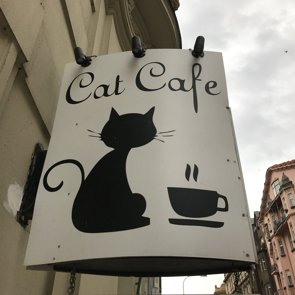 Click here for more information and a review of Cat Cafe Prague