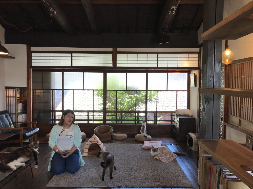 Cat Apartment Coffee in Kyoto, Japan is one of the best cat cafes in the world