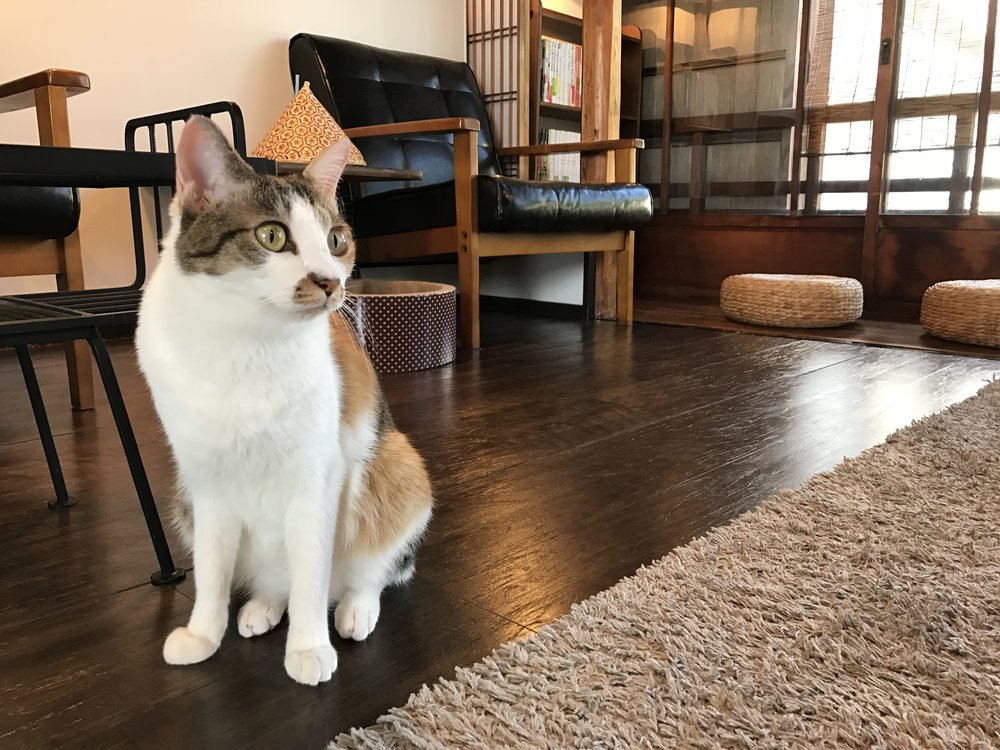 Click here for a complete review of Cat Apartment Coffee in Kyoto, Japan