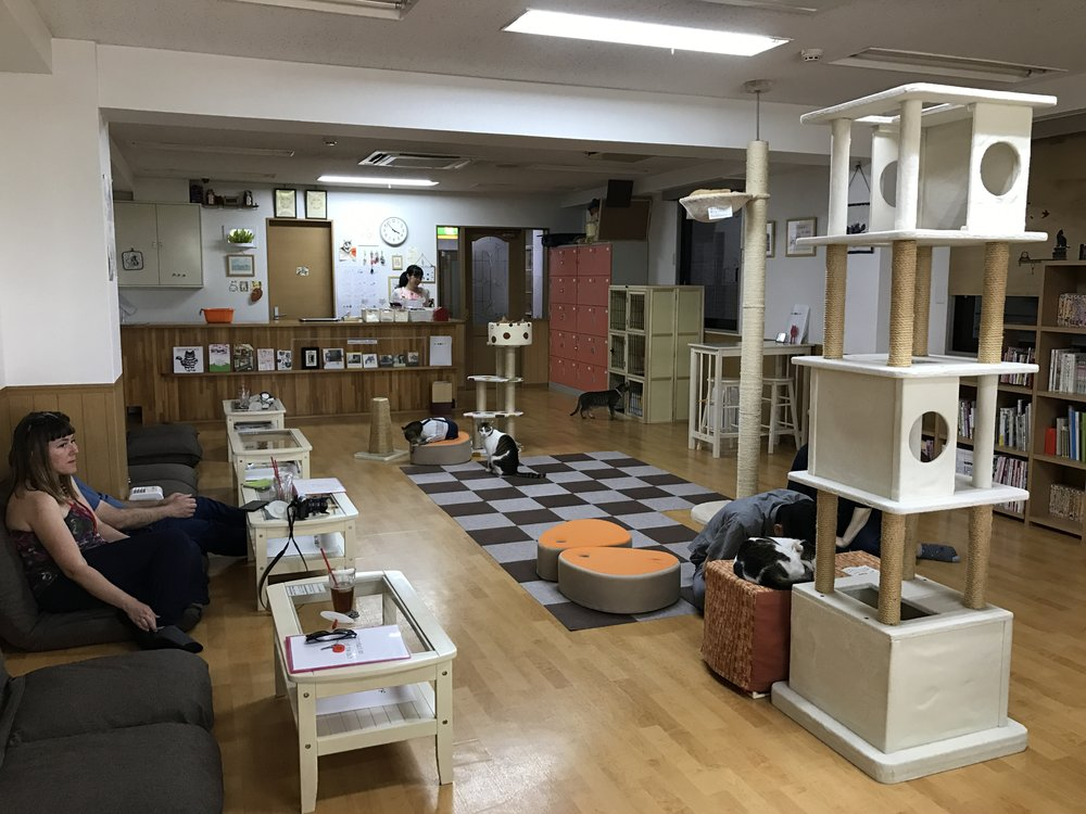 Cat Cafe Nekokaigi is a shelter-supported cat cafe in Kyoto, Japan