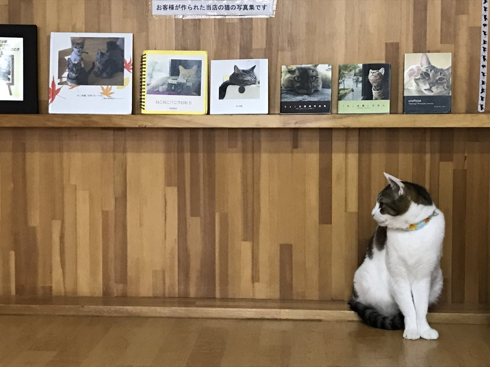 Cat Cafe Nekokaigi is spacious, clean and fresh with plenty of comfortable seating and a relaxed atmosphere