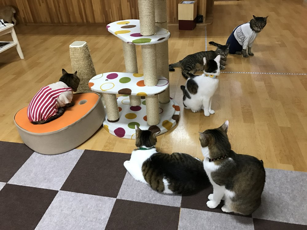 Click here for a complete review of Cat Cafe Nekokaigi