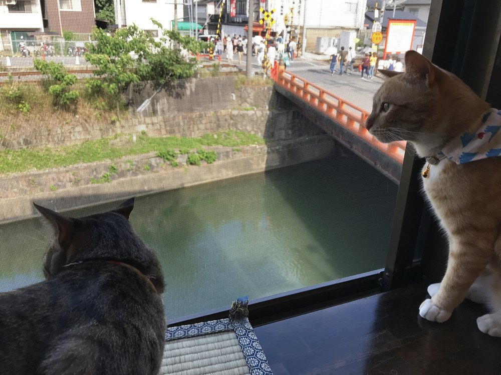 Neko Cafe Time is located near Fushimi Inari Grand Shrine in Kyoto, Japan