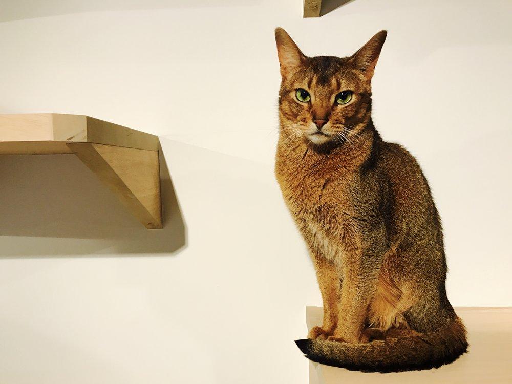 Nag_CatsGallery_15.jpg