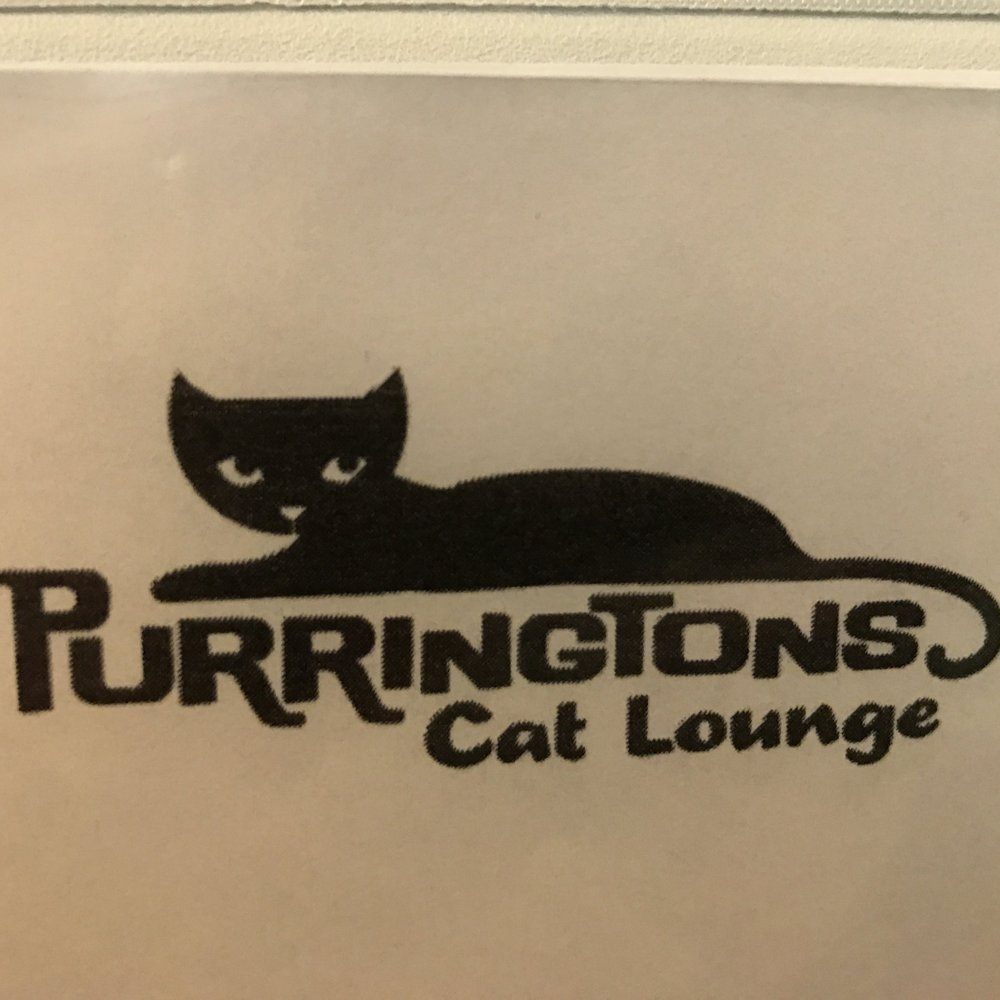 Purringtons Cat Lounge   Portland, OR, USA