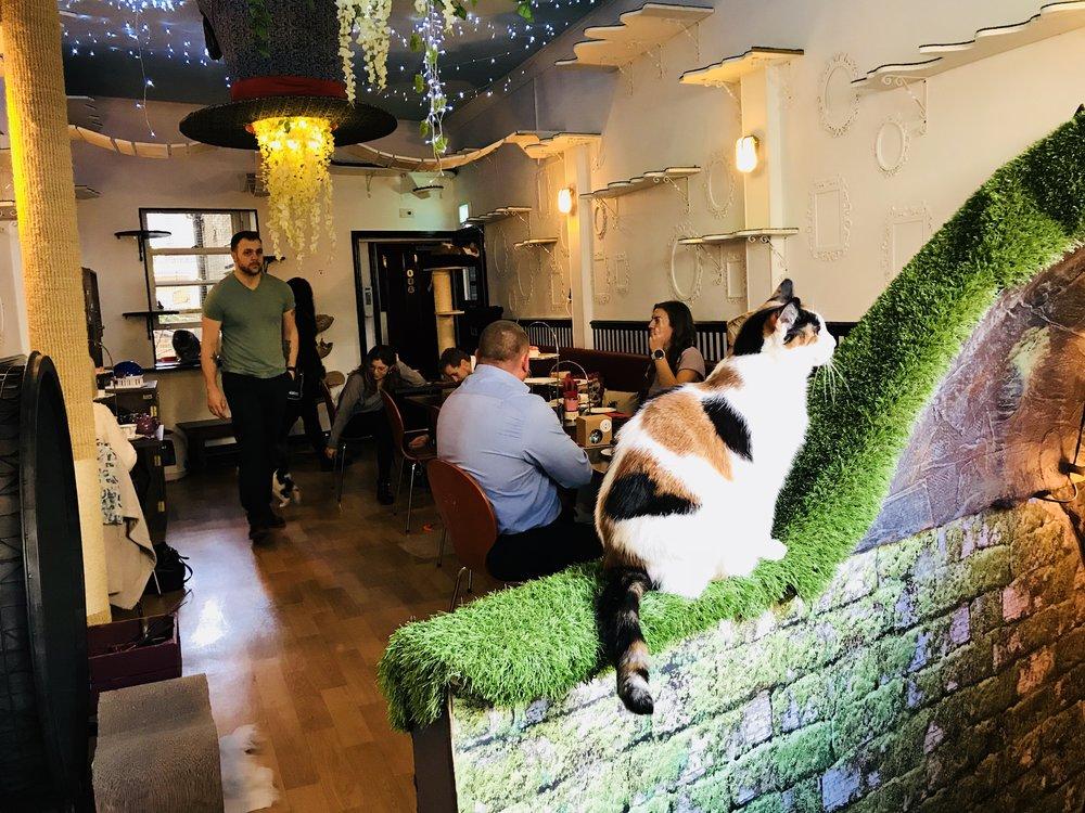 Lady Dinah's Cat Emporium, London, United Kingdom