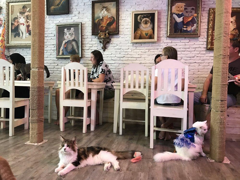 Caturday Cafe, Bangkok, Thailand
