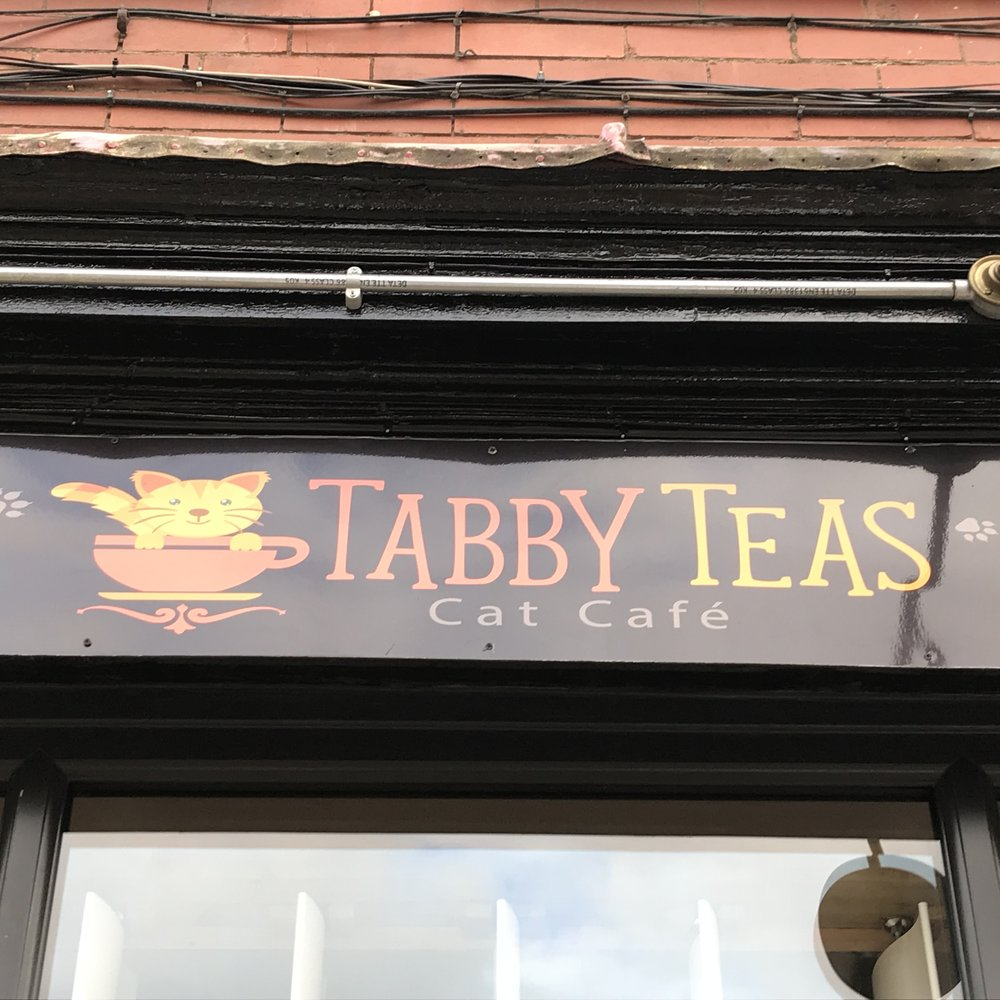 Tabby Teas Cat Cafe   Sheffield, United Kingdom