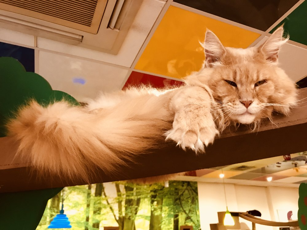 Heathcliffe:  Kitty Cafe Nottingham