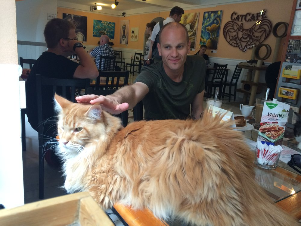 Cat Cafe Budapest:  Budapest, Hungary