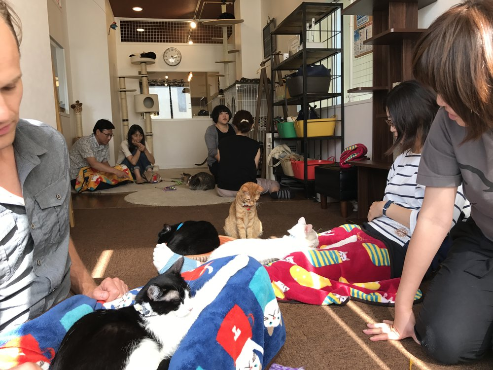 Save Cat Cafe:  Osaka, Japan