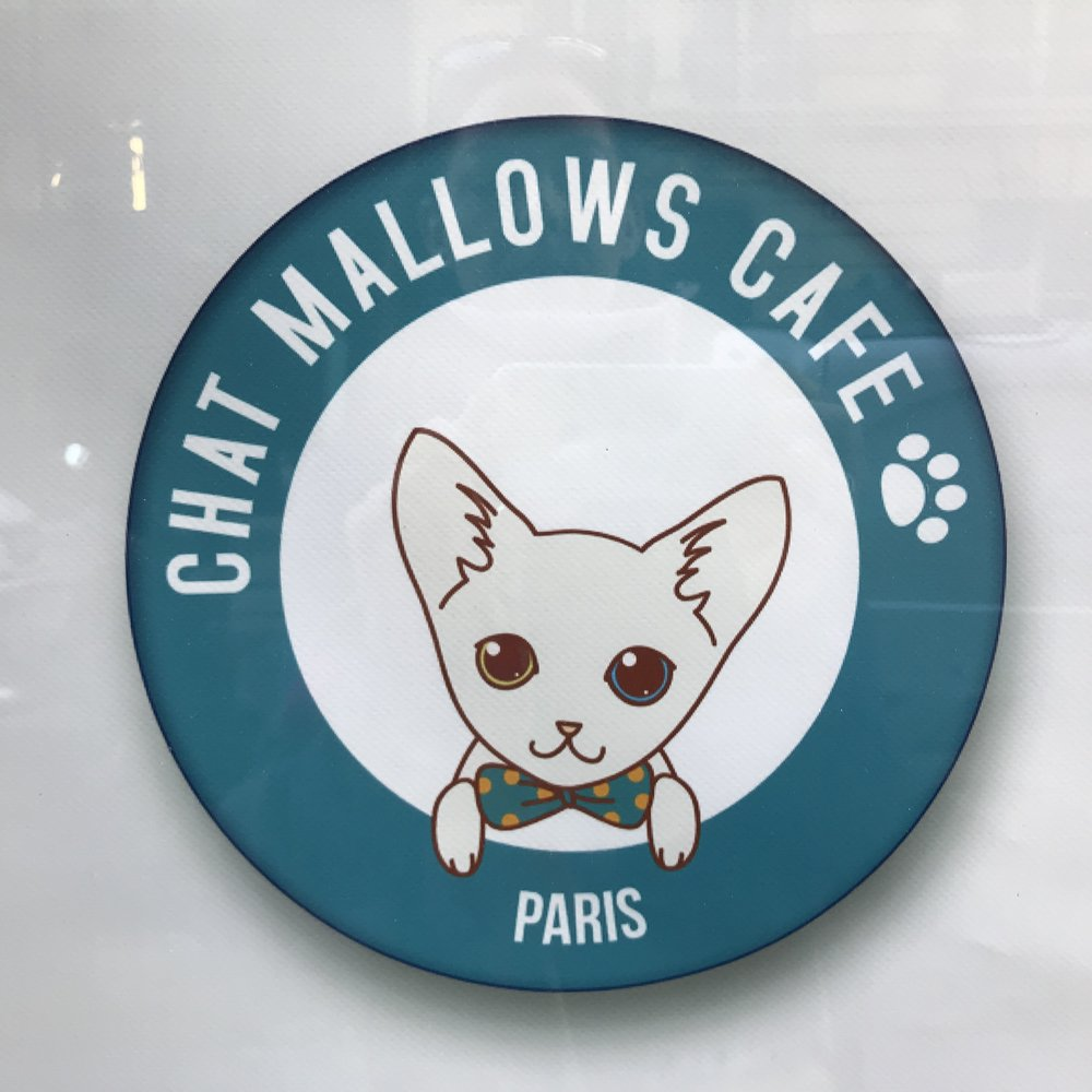 Chat Mallows Cafe   Paris, France