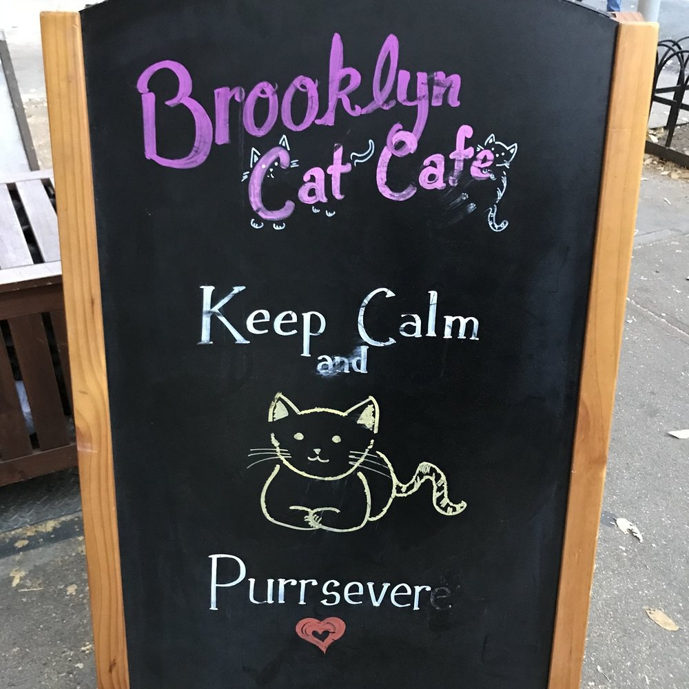 Brooklyn Cat Cafe   Brooklyn, NY, USA