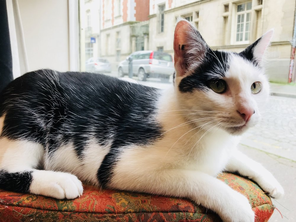 Le Chat Puccino:  Rennes
