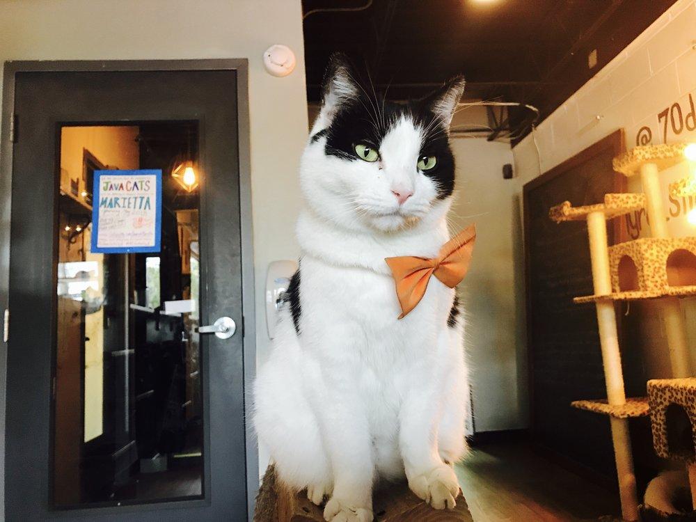 Java Cats Cabell.jpg