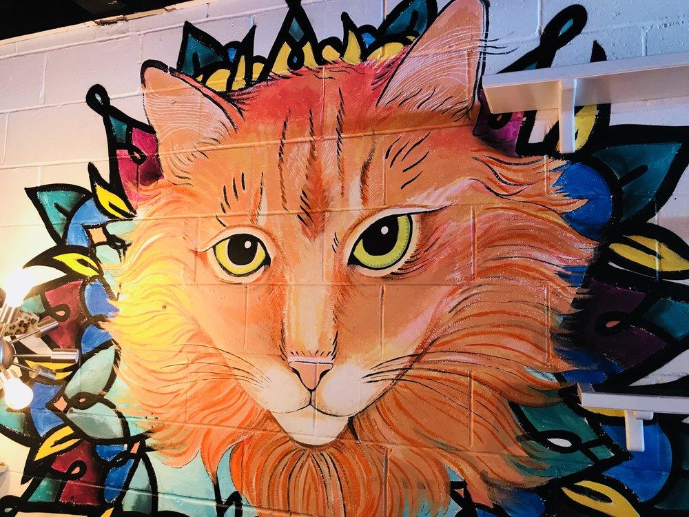 Java Cats-23.jpg
