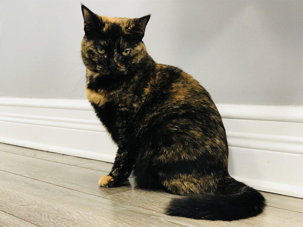 Location Cat Automat-041.jpg