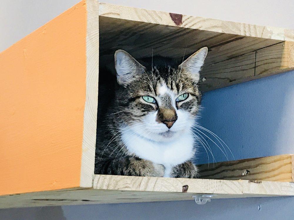 Location Cat Automat-017.jpg