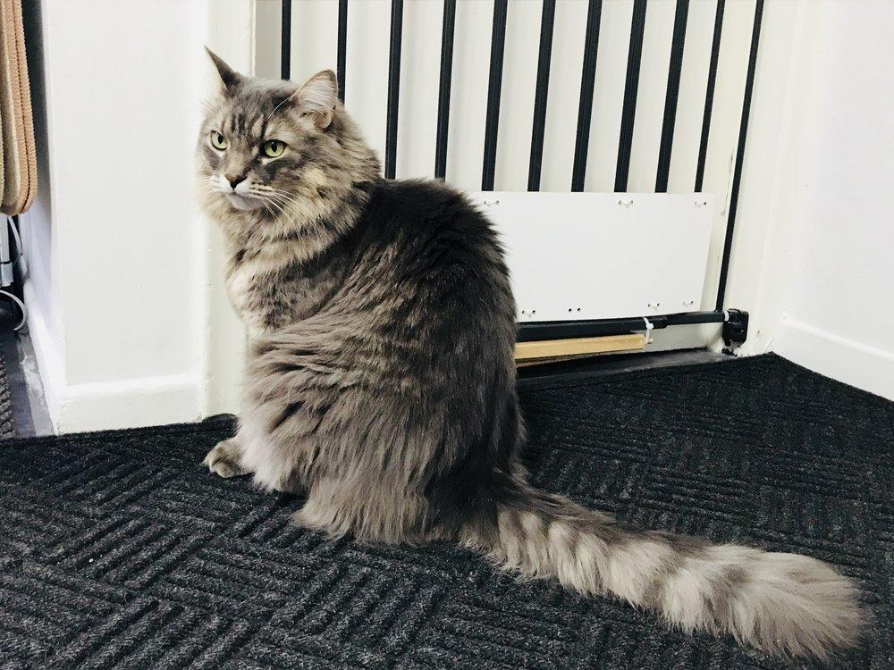 Meow-16.jpg