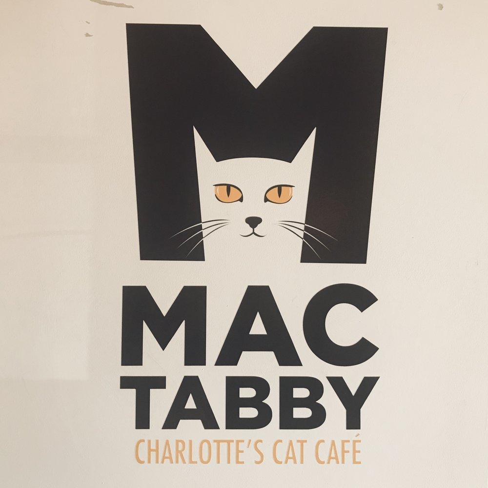 Mac Tabby   Charlotte, NC, USA