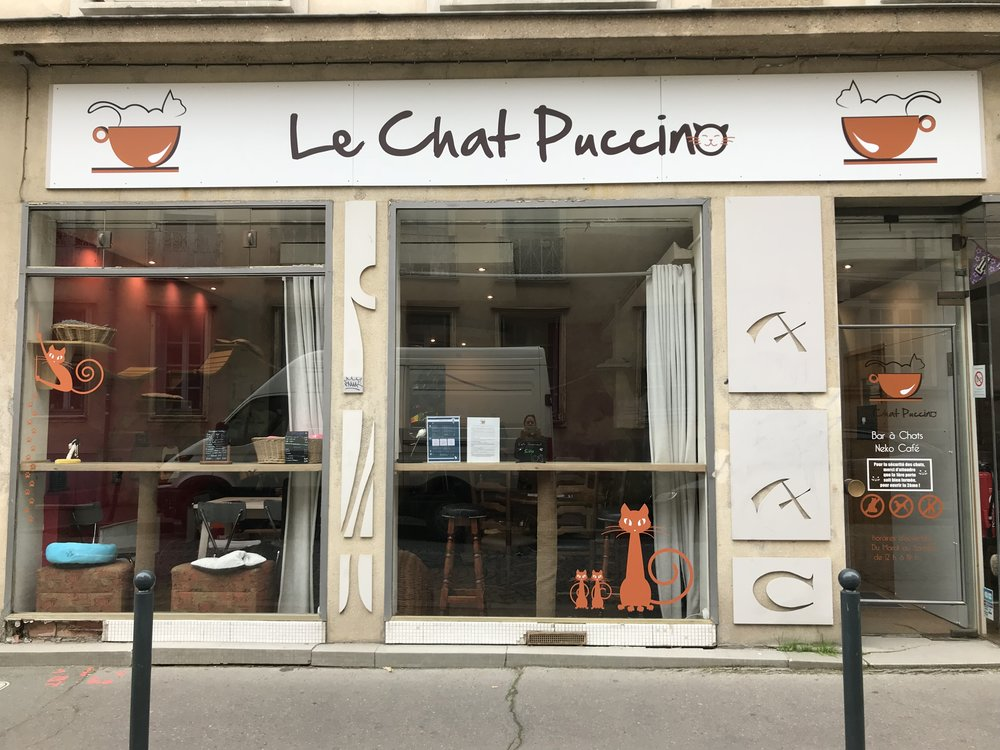 Chatpuccino_rennes-01.jpg