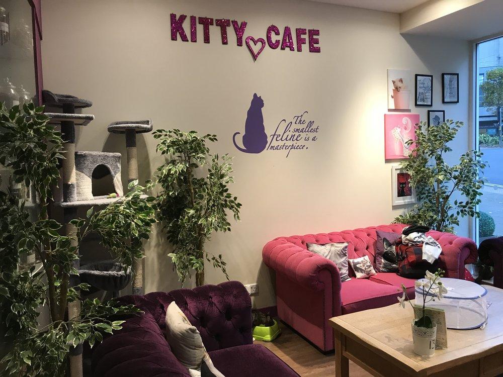 KittyCafeNottingham-10.jpg