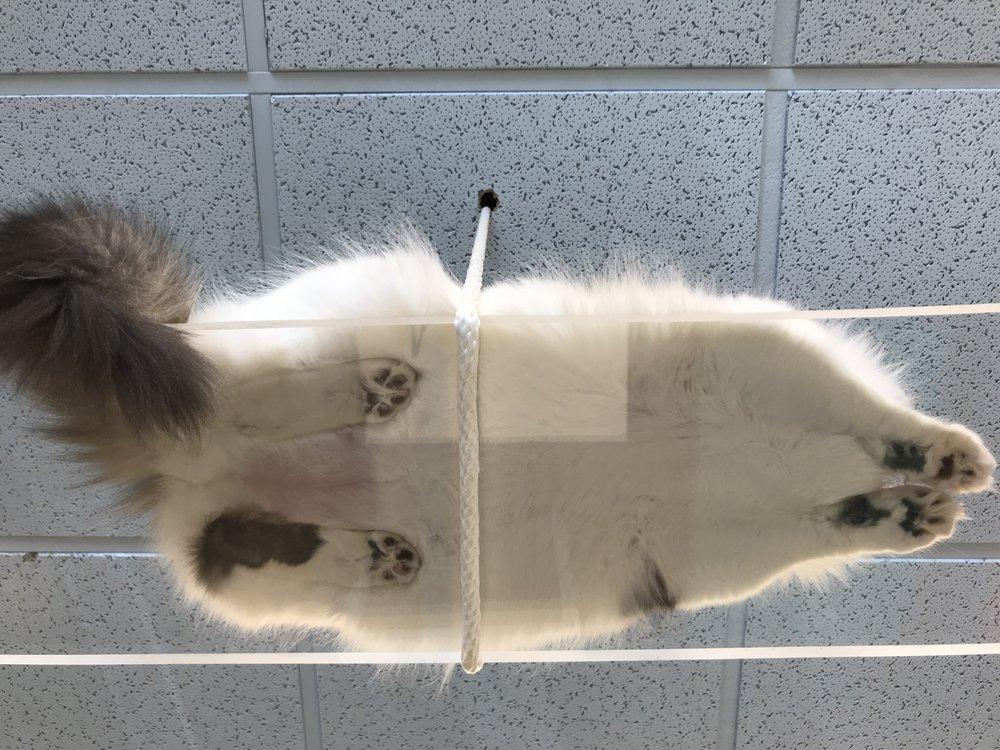 Location Cat Automat-021.jpg