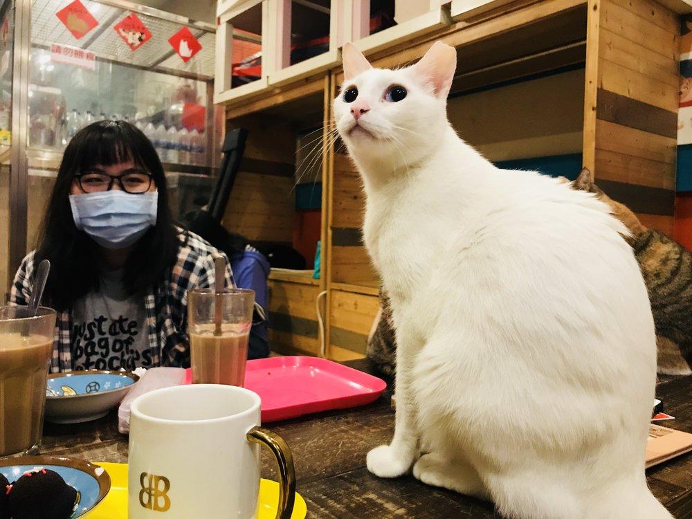 Cat Art Home-26.jpg