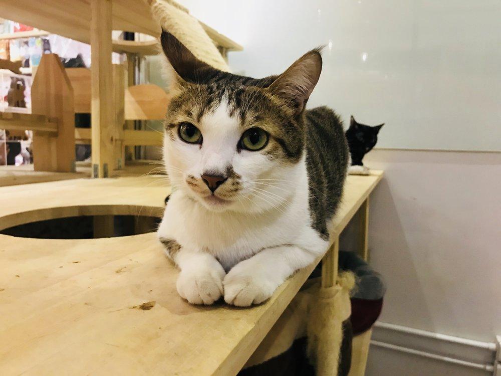 3 Cats-30.jpg